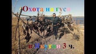 Охота на гуся 2017 в Якутии часть 3 заключительная