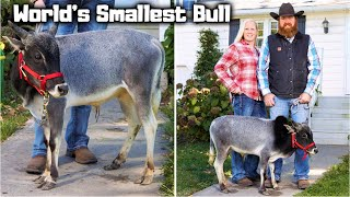 Top 10 Smallest Land Animals in the World