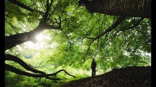 Gamta, harmonija, atsipalaidavimas / nature, harmony, relaxation. Allah   الله