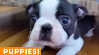 New Year New Puppies Compilation 2019 | Funny Pet Videos