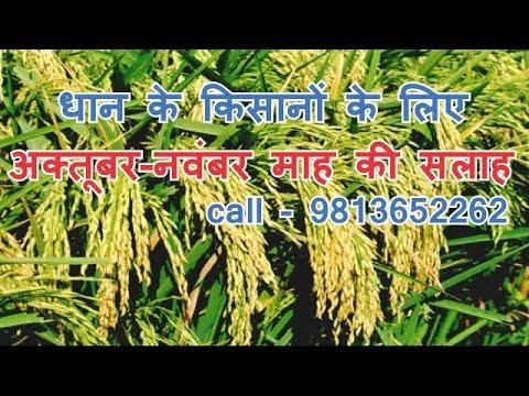 जो किसान धान की खेती करते हैं वह इस वीडियो को जरूर देखें | How to advance cultivation of dhaan