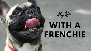 HOW TO TAKE CARE OF A FRENCH BULLDOG