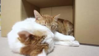 しろととら Good friend cat 2015#9