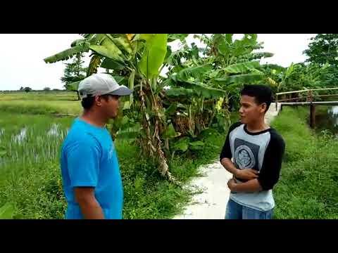 #ManfaatDanaDesa Desa Jejawi Kecamatan Jejawi.Kab OKI.