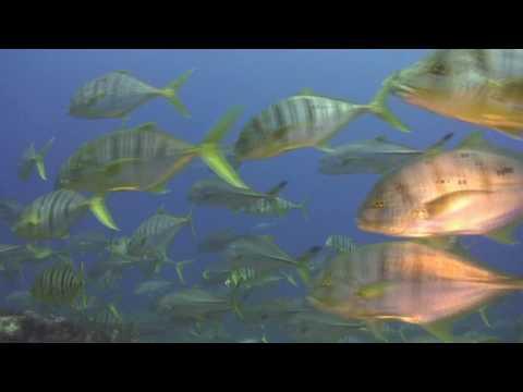 Plongée Seychelles Mahé Seychelles Enerdale Rock