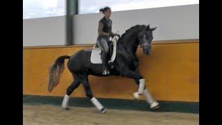 Licensed Stallion by Finest x Belissimo M x Donatelli, *2015