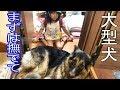お帰り!甘えるシェーパード犬と孫娘の日常風景 の動画、YouTube動画。