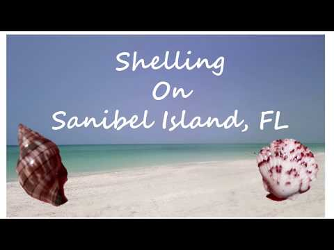 Shelling On Sanibel Is, FL // Tons Of Sea Shells 🐚🐚🐚