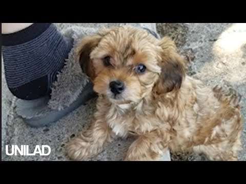 Extremely Cute Puppy | UNILAD