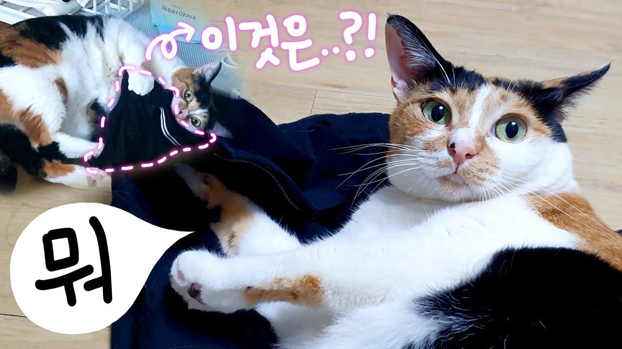집사의 은밀한 물건에 집착하는 고양이