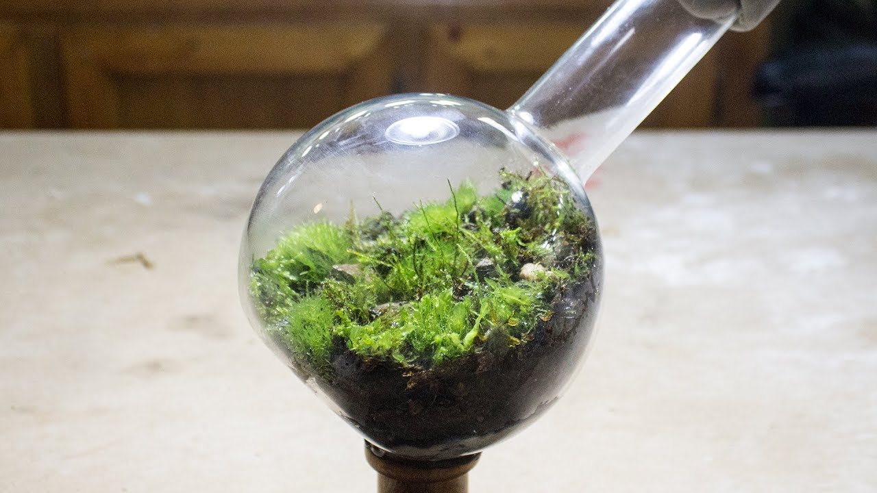Making A Florence Flask Mossarium Youtube