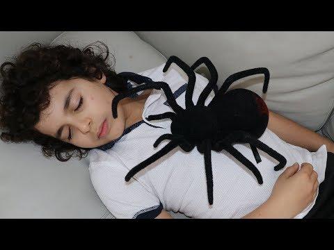 Sami He Found Spiders At Home :  العناكب في المنزل