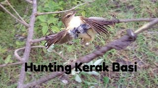 Mancing Burung kerak basi pake suara ribut