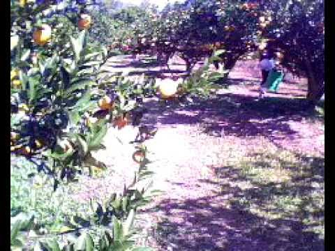 Orange farm in taiwan