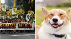 New Proposal To Solve Global Warming: Get Rid of Dogs