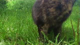 Un chat sauvage apprivoisé en deux ans