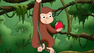 Jorge el Curioso | La aventura de Jorge en el Amazonas | Dibujos animados para niños | WildBrain