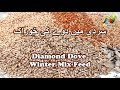 Diamond Dove Winter Mix Feed | Winter Mix Seeds | Diamond Dove Food | Urdu /Hindi