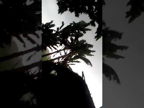 Dekho Nashe Mein Zaroor video song