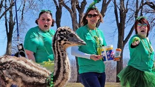 an emu at a parade? here's what happened...