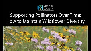 Supporting Pollinators Over Time: How to Maintain Wildflower Diversity
