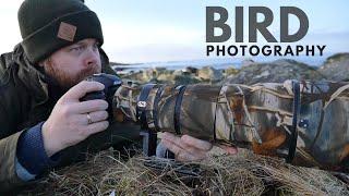 BIRD PHOTOGRAPHY at the coast    I did not expect this - wren, nikon D500