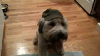 Rufus sits, stays, lays down, and talks with his hat on Thumbnail