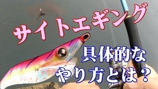【サイトエギングの具体的なやり方】秋の見えイカを釣ることが出来る有効な誘い方とは? thumbnail