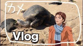 【Vlog】ハワイのビーチでウミガメと遭遇!