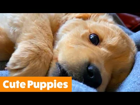 Funny Puppy Bloopers & Reactions | Funny Pet Videos