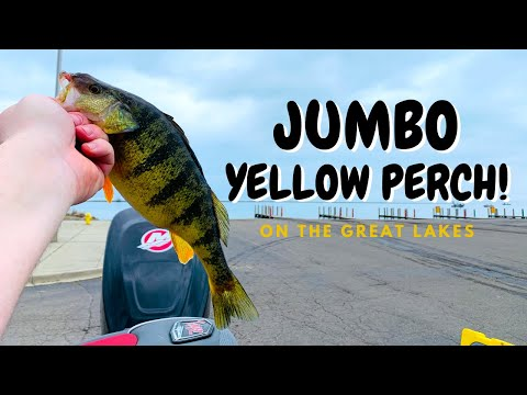 Spring Jumbo Yellow Perch Fishing On The Great Lakes