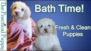 How to Bathe Your Puppy