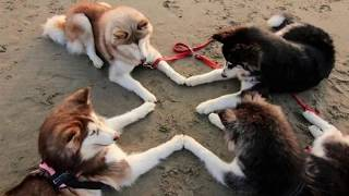 Топ 5 дорогих собак