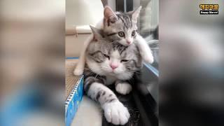배꼽 빠지게 웃긴 냥이와 댕댕이의 영상모음 #26 | Dogs and Cat Funny Moments | Funny Animals Compilation #26