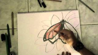 Moarch Butterfly Drawing (By J.D Rodriguez Sandoval)