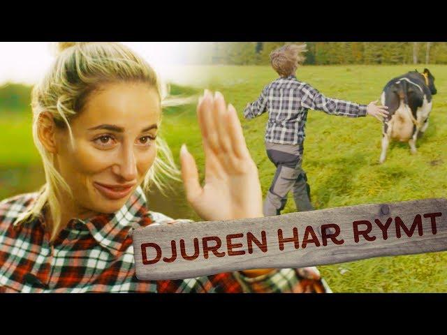 DJUREN HAR RYMT!! | GÅRDSKAMPEN | EP3