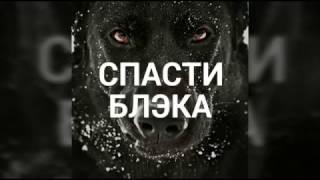 """Собака в ЖУТКОМ состоянии, КАК ПОМОЧЬ, ПРИРУЧИТЬ,психологическая реабилитация. """"Спасти Блэка!"""""""