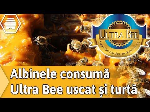Albinele Consuma Ultra Bee Uscat Si Turta