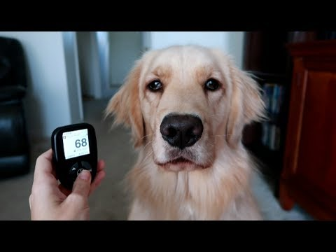 Thumbnail: 🐶 Service Dog Wakes Me Up From Low Blood Sugar! 😱 (5/28/17)