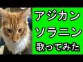 ASIAN KUNG-FU GENERATION/ソラニン 歌ってみた【レオン】