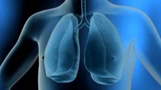 Zoom sur la respiration