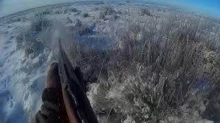 Охота на зайца в Казахстане 2018 год