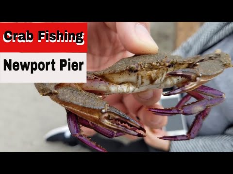 Gone Crab Fishing At Newport Beach Pier & Visiting The Crab Cooker Restaurant