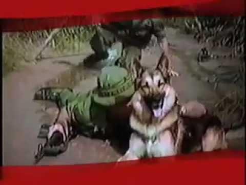 9/11 Most Amazing Hero Dogs.mov