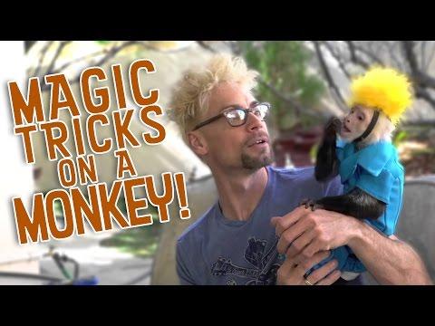 Monkey Tricked By Magic!