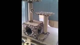 Купить домик для кошки Барсик Мяу Хаус