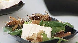Съедобные насекомые – ответ на нехватку еды в будущем? (новости)