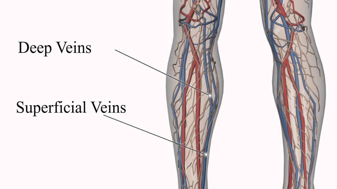 How Varicose Veins Form - YouTube