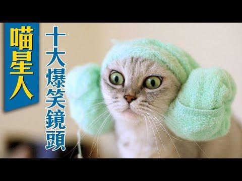 猫咪最新搞笑镜头Top10