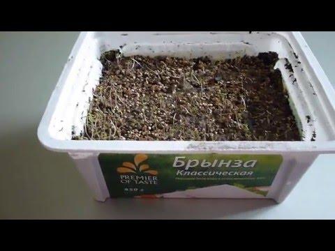 Портулак-как посеять и вырастить из семян.Портулак -выращивание.Фильм № 2.Всходы.